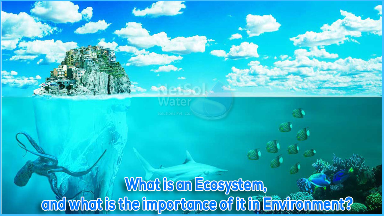 Ecosystem, importance of ecosystem in environment, how to create better ecosystem for all creatures