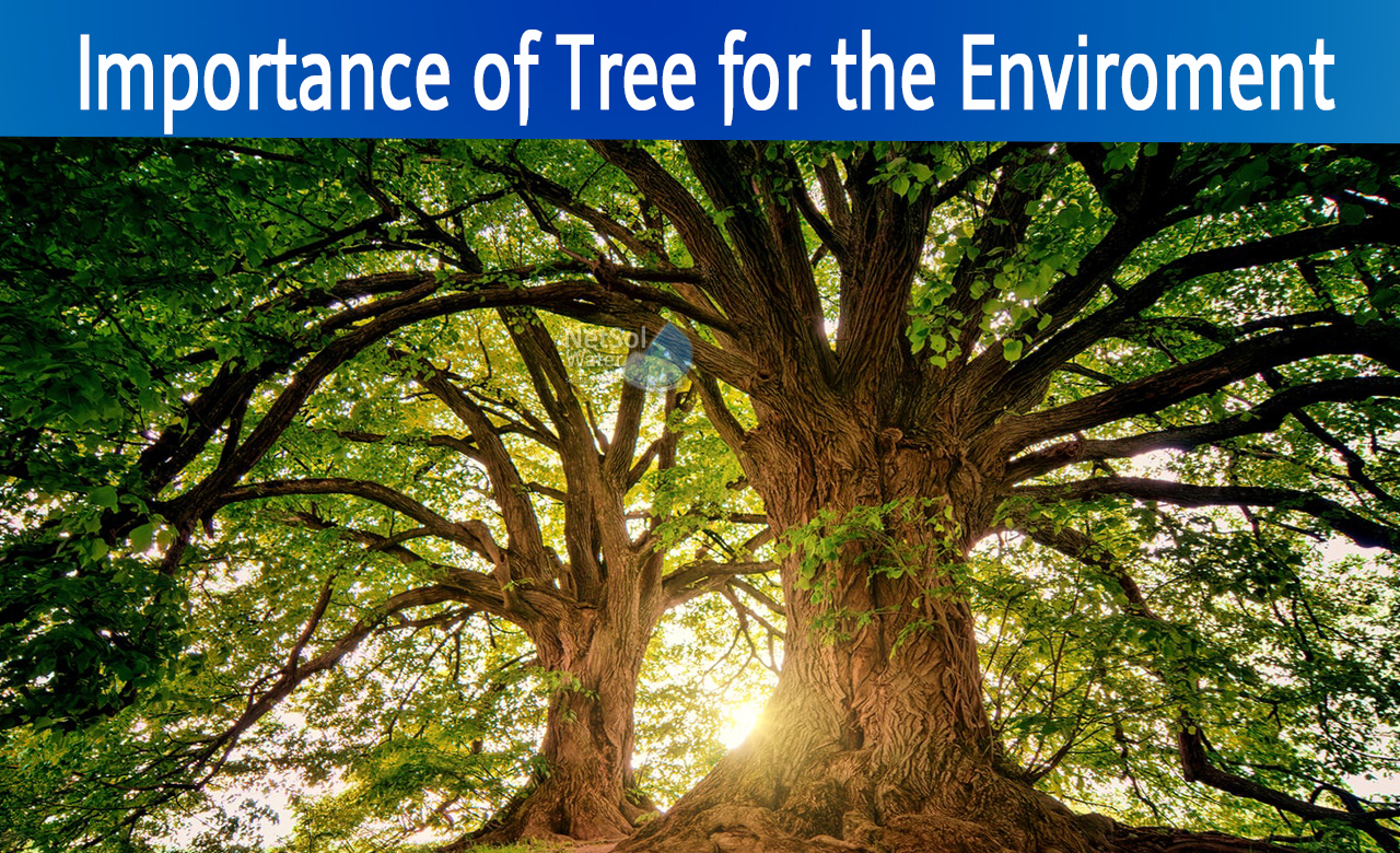 role of tree in environment, how important trees are, importance of tree for living on earth